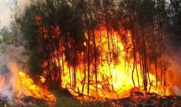 حرائق أستراليا