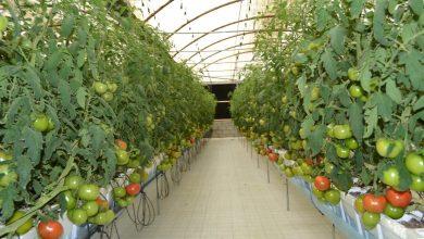 Photo of كيف تطورت الزراعة في الإمارات
