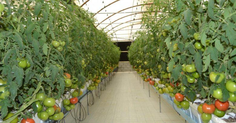 الزراعة في الإمارات